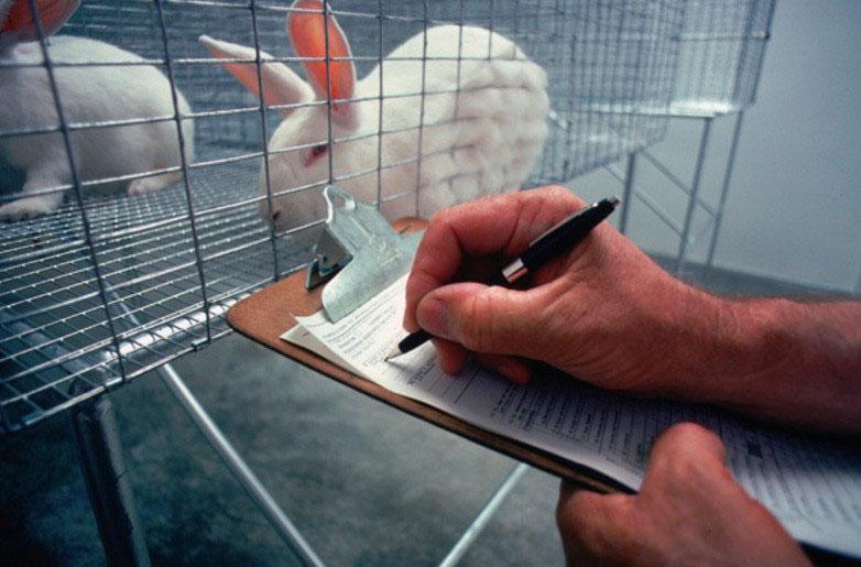 Animal+Testing