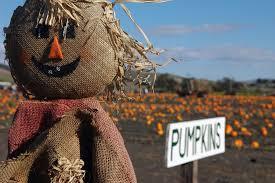 Celebrate Fall with a pumpkin patch adventure