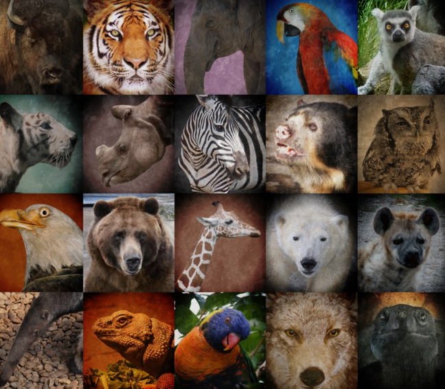 Today+is+Endangered+Species+Day