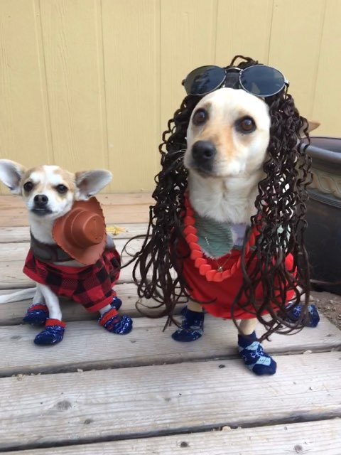 Nano (left) and Kiara (right) stare at their owner while wearing their costumes and socks to protect their paws.